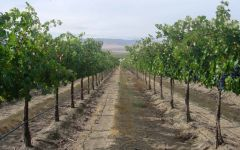 K Vintners Wahluke Vineyard Winery Image