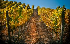 Terrunyo Los boldos vineyard Winery Image