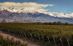 Trivento Summertime in Mendoza  Winery Image