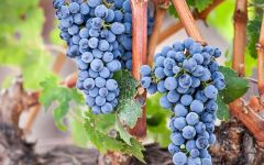 Quilceda Creek Galitzine Vineyard Cabernet Winery Image