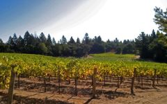 Snowden Ricos Vineyard Winery Image