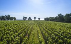 Chateau Lynch-Bages The Gironde River from Lynch-Bages Winery Image