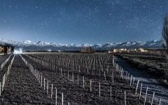 Luca Nightfall Winery Image