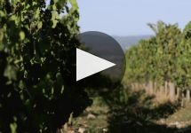 Mazzei Winery Video