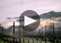 Ferrari-Carano  Winery Video