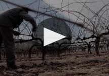 Emilio Moro Winery Video