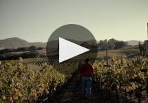 Arrowood Vineyards & Winery Arrowood Well Farmed  Winery Video