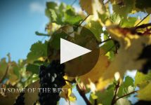 Matua Winery Video
