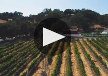 Lincourt Vineyards Winery Video