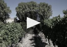 Chateau Pesquie Winery Video