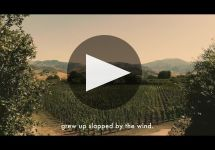 Cusumano Winery Video