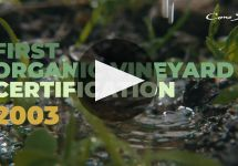 Cono Sur Winery Video