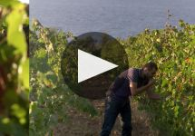 Argiolas Winery Video