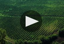 Mastroberardino Winery Video
