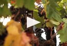 Michael David Winery Winery Video
