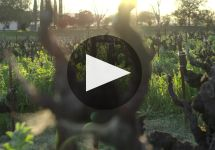 Ridge Ridge Winery Video