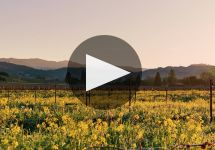 Simi SIMI 140th Anniversary Video Winery Video