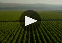 Billecart-Salmon Winery Video