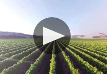Wither Hills Winery Video