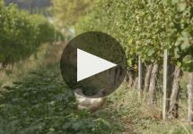 Loveblock Who is Loveblock? Winery Video