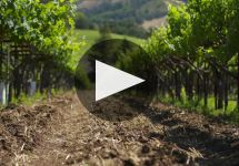Kenwood Winery Video