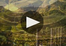 Donnhoff Winery Video