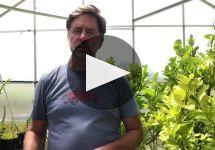 Failla Winery Video