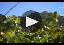 Louis Bernard Winery Video