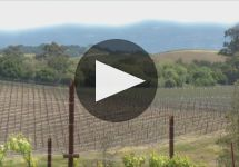 Domaine Carneros Winery Video