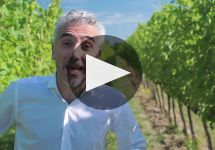Torresella Winery Video