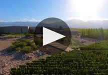 Familia Zuccardi Vineyards Winery Video