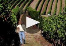 Benton Lane Learn More about Benton Lane Winery Winery Video