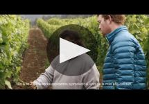 A to Z Winery Video