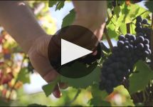 Domaine Faiveley Winery Video