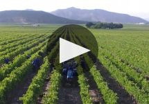Excelsior  Winery Video