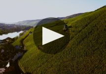 Dr. Thanisch Winery Video