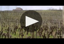 Chateau Clos Haut Peyraguey Winery Video