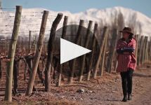 Catena An Introduction to the Adrianna Vineyard Winery Video