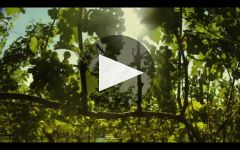 Segura Viudas Winery Video