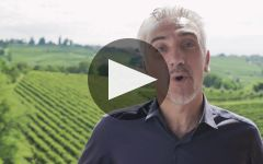 Santa Margherita Winery Video