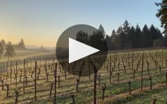 Soter Vineyards Winery Video