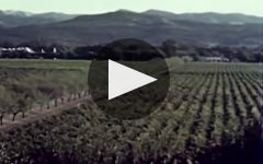 Trinchero Napa Valley Winery Video