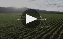 Robert Mondavi  Winery Video