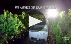 Cakebread Cellars Winery Video