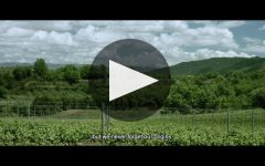 Codorniu Winery Video
