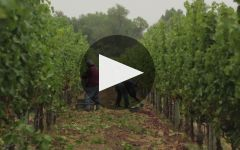 Video of winery