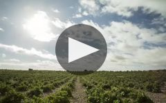 Numanthia Winery Video
