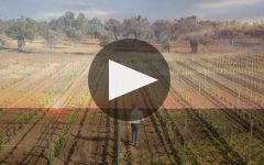 Castello Monaci Winery Video
