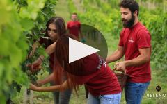 Velenosi Winery Video