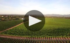 William Hill Estate Winery Winery Video